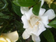 My favorite flower reminds me ofy wella r.i.p