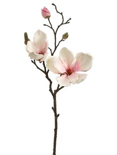 Magnolia Spray in Blush Pink - 19 Inches Tall. Blush magnolias with pink centers adorn this natural looking brown stem. There are two flowers with buds to help give it a freshly flowered look. Great a