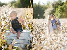 cotton photography, cotton mini, family cotton photos, child photography, children photographer, natural light, cotton field, son, baby boy, one year old
