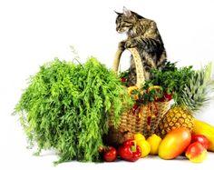 Top 13 Best Cat Food Brands Of 2016