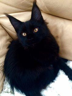 Bagheera the kitty! ^=^