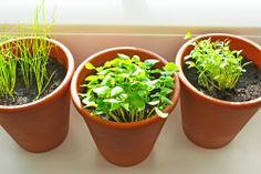Jetzt Kräuter auf der Fensterbank anbauen und zusehen wie sie wachsen ;) www.gutekueche.at Kraut, Planter Pots, Diy, Backyard Farming, Patio, Fruit Garden, Indoor House Plants, Flowers, Balcony