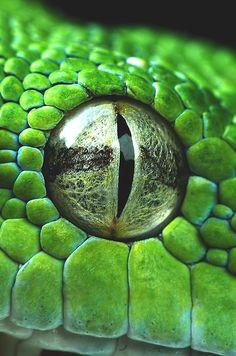 wavemotions: Snake eye closeup by Henrik Vind