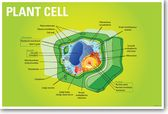 Plant Cell Biology NEW CLASSROOM BIOLOGY SCIENCE POSTER