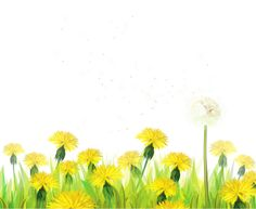 Transparent Grass with Dandelions Clipart