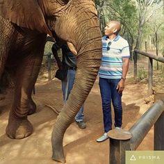 Hartebeespoort Elephant Sanctuary Elephant Sanctuary, Tours, Animals, Animales, Animaux, Animais, Animal