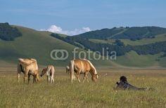 Uomo fotografa cavalli a Castelluccio di Norcia (PG) - Man photographing horses © Pietro D'Antonio
