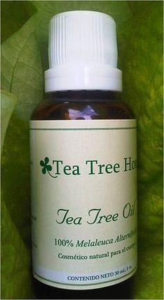 Tea Tree Oil en México, remedio para hongos en pies y uñas
