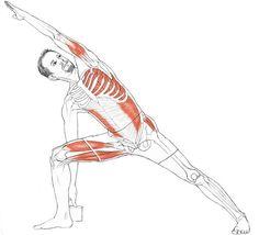 Utthita Parsvakonasana (Extended Side Angle Pose) via @lkaminoff