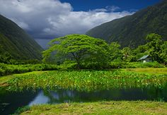 THE GODS  BIG ISLAND, HAWAII  The gods of Hawai'i are still very much alive:  Lono, the god of the plains.