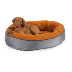 same kinda dog as mine soo cutee love my little veisla :)