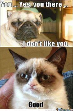 Grumpy Dog Vs Grumpy Cat😂