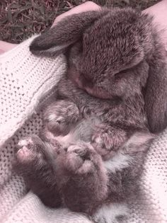 Love a cute and cuddly bunny! on We Heart It Bunny Love, Cute Baby Bunnies, Cute Baby Animals, Funny Animals, Bunny Bunny, Lop Bunnies, Wild Animals, Easter Bunny, Cute Bear