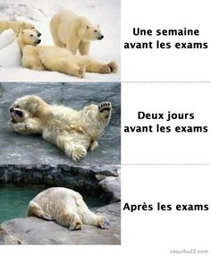 Before the exams, during the exams, after the exams...prophetic for tommorrow?