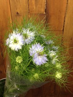 Pale blue Nigella...Sold in bunches of 10 stems from the Flowermonger the wholesale floral home delivery service.