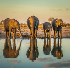 Reflection by Tamani
