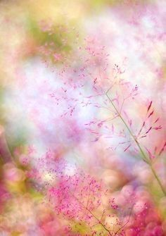 "Jim Beattie on Twitter: ""Good Morning. Have a wonderful Sunday 😊🙏… "" Fotografia Macro, Pastel Flowers, Wild Flowers, Flower Wallpaper, Wallpaper Backgrounds, Pretty Wallpapers, Pretty Pastel, Macro Photography, Floral Photography"