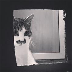 Grincheux kitty moody lazy days hangover unisexe t-shirt blanc