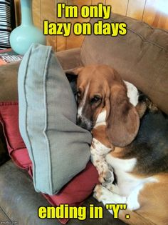 The 35 Funniest Basset Hound Memes of All Time Basset Hound Funny, Basset Puppies, Beagle Funny, Hound Puppies, Beagle Dog, Funny Dogs, Beagles, Puppy Quotes, Dog Toilet