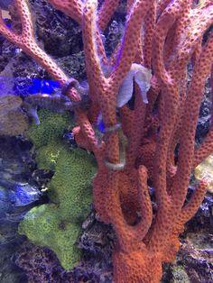 Seahorses - Photo by CS Lent