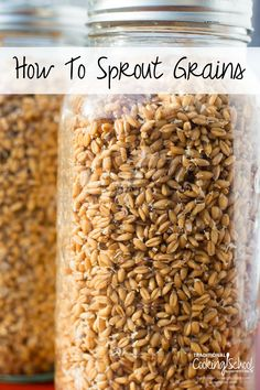 How to Sprout Grains | Traditional Cooking School Sprout Recipes, Plant Based Recipes, Vegetable Recipes, Clean Recipes, Raw Food Recipes, Sprouted Wheat Bread, Growing Sprouts, Nourishing Traditions, Herbal Cure