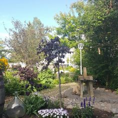 Hagen min Garden, Plants, Pictures, Photos, Garten, Flora, Plant, Lawn And Garden, Outdoor