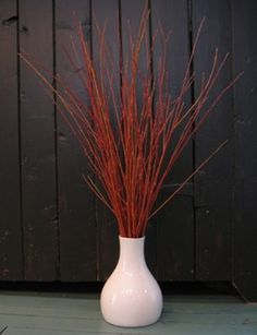 Flame willow - The Branch Ranch