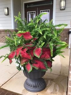 Stylish Amazing Container Flowers Garden Design Ideas For Spring Flower Garden, Garden Design, Flower Pots, Plants, Garden Planters, Indoor Gardening Supplies, Flowers, Container Gardening Flowers, Garden Landscaping
