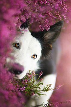 Beauty in the flower field
