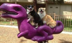 19 Reasons You Think Animals Are Better Than People