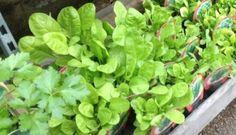 Los huertos urbanos han llegado para quedarse Vegetable Garden, Garden Plants, Indoor Plants, Garden Stand, Tomato Plants, Pre And Post, Plantar, Back Gardens, Flower Beds
