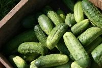 3 Tips for Making Fresh Crunchy Lacto-Fermented Dill Pickles from Cultures for Health