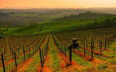 Nel cuore della Toscana, un mondo ancora a misura d'uomo... il Chianti - Vigneti