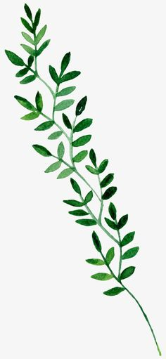 Green leaves PNG and Clipart Watercolor Plants, Watercolor Leaves, Watercolor Paintings, Watercolour, Easy Canvas Painting, Mirror Painting, Canvas Art, Plant Aesthetic, Aesthetic Painting