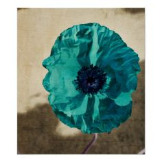>>>Are you looking for          Teal Poppy Poster           Teal Poppy Poster This site is will advise you where to buyThis Deals          Teal Poppy Poster Here a great deal...Cleck Hot Deals >>> http://www.zazzle.com/teal_poppy_poster-228178778460932901?rf=238627982471231924&zbar=1&tc=terrest