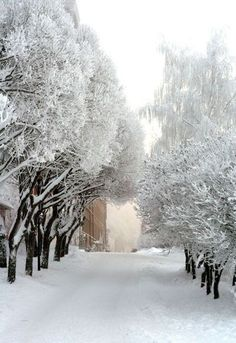 My Favorite Outdoor Christmas Photos II Winter Love, Winter Snow, Winter White, Winter Christmas, Snow White, Winter Pictures, Nature Pictures, Winter Magic, Winter Scenery