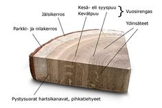 Puun rakenne - Puun rakenne - PuuProffa Elementary Schools, Trees, Woodworking, Science, Teaching, Nature, Crafts, Diy, Decor