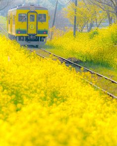 Blossom Garden - Paradise of Flowers! Beautiful World, Beautiful Places, Landscape Photography, Nature Photography, Blossom Garden, Fields Of Gold, Felder, Train Tracks, Color Of Life