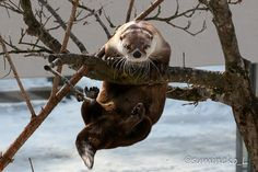 Otter's Completed One Pull-Up - Now It's Time for a Treat!