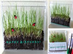 Save your old CD cases! Soil + grass seed + poster markers = living art. Art Projects for Kids