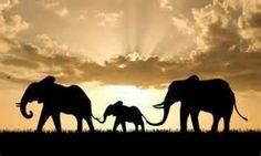 World Elephant Day Images - Bing images