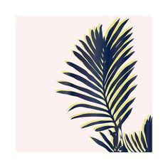 Palm Study #2 Wall Art Prints by Cindy Lackey | Minted