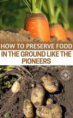 How To Preserve Food In The Ground Like The Pioneers- The natural preservation method involves leaving the vegetables in the ground and in some countries is known as late or delayed harvest. It's quite a simple method, and you don't have to pick the vegetables and move them to another location. Everything is done on the spot, in the garden. #homestead #homesteading
