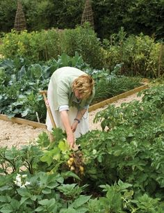 Want to start a vegetable garden but not sure where to start? Sarah's guide will help you begin.