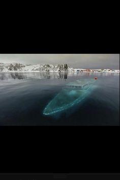 Frozen ship wreck