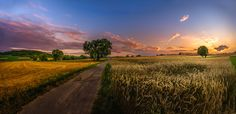 Lane through a wheat field (Germany) by Ralf Thomas - 500px