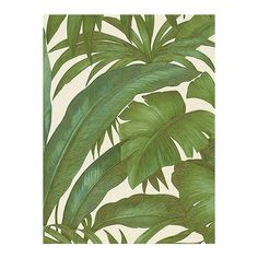 Versace Home Palm Leaves Wallpaper ($125) ❤ liked on Polyvore featuring home, home decor, wallpaper, backgrounds, pattern, phrase, quotes, saying, text and versace home decor