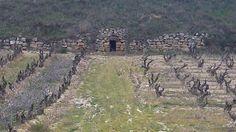 Viñedos Villabuena de Álava. Rioja Alavesa