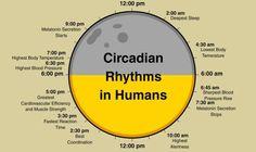 M A qué hora entrenar? circadianos