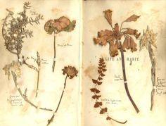 Flowers // Notebook